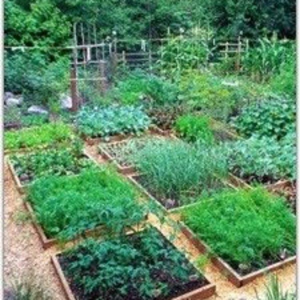 ziolowy ogrodek w ogrodzie 2