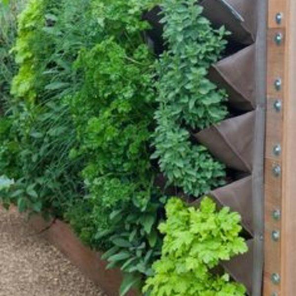 ziolowy ogrodek w ogrodzie 4