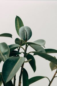 plakaty do wydrukowania botaniczne