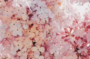 plakaty do wydrukowania kwiaty botaniczne