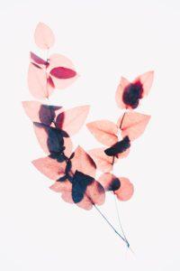 plakaty do wydrukowania liście rośliny